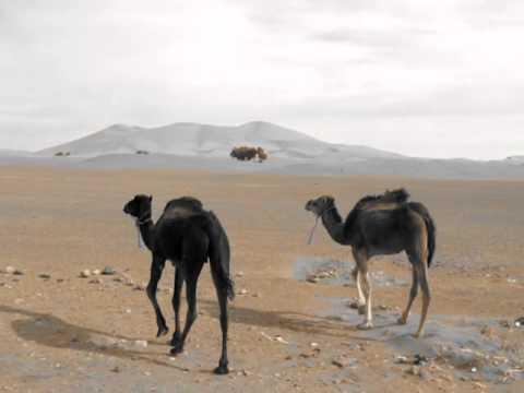 Desierto Erg Chebi, Merzouga (Marruecos)