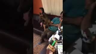 سگ به این خوشگلی ترس داره؟