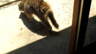 Germantown Metropark Nature Center Raccoon Invasion. Part 1