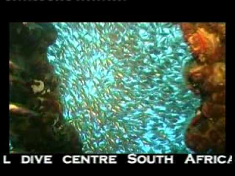 Scuba Diving South Africa – Reef Diving at Aliwal Shoal
