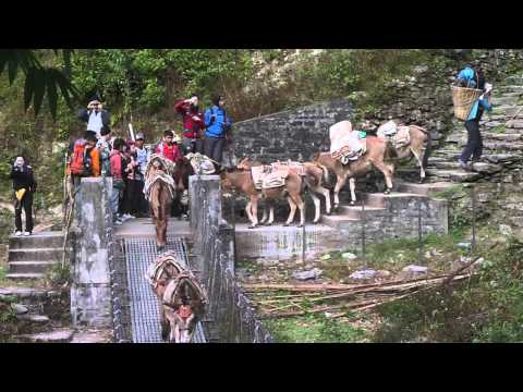 Poon Hill Trek Day 2_Ramghai to Banthati_Splash@Nepal 2011 by Brice Li