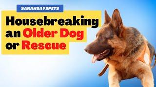 House Breaking Older Dog or Rescue | Sarah Hodgson | Modern Dog Parenting