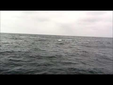 Clip1 Whales Puerto lopez Ecuador.wmv