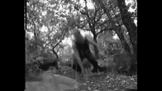 Forêt | David Belle (Official)