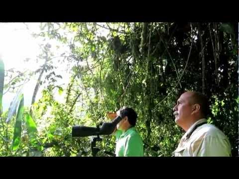 Birdwatching in Ecuador San Jorge Tandayapas 1