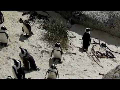 Cape Peninsula, South Africa – Kinetic Snapshots