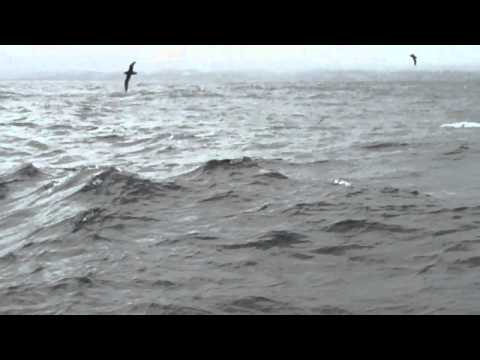 Bottlenose Dolphin Pod – Durban South Africa