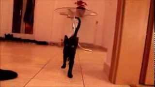 Little tomcat surprise attack