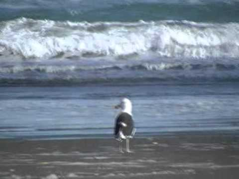 Viaje por Sudamerica di Giacomo Sanesi. Parque Nacional Chiloè (CIL). 01220 – verso l'oceano