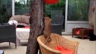 Cute Little Ginger Tomcat