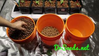 PREPARING LECA (LIGHT EXPANDED CLAY AGGREGATE) FOR HYDROPONICS