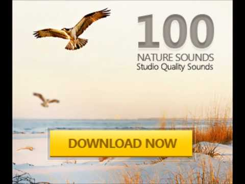 nature-sounds-1-freesoundclips