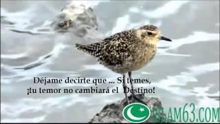 Mi Punto de Vista Sobre el Amor (Anasheed) con Subtítulos en Español