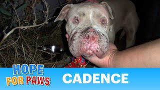 Saving Cadence - an abused Pit Bull shows us the power of second chances.  Please share.