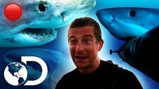🔴Episodios completos sobre tiburones (sin interrupciones)   Shark Week   Discovery Latinoamérica