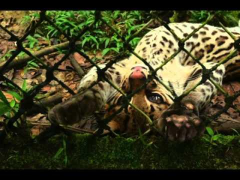 VESA Ultimate Amazonas Explored 2012
