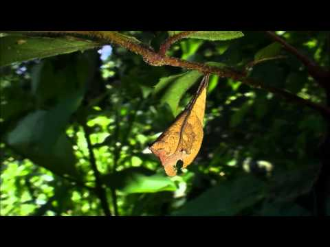 蟲相逢宣導短片(5分鐘版) - YouTube