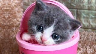 おかしい猫 - かわいい猫 - おもしろ猫動画 HD #216 width=