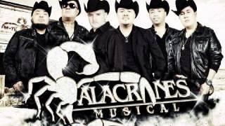 Alacranes Musical-Sin Recompensa Ni Esperanza 2013