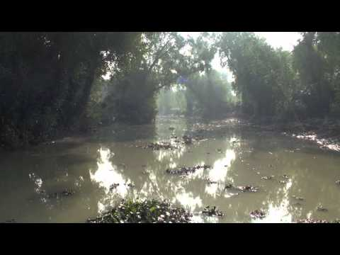 Silence of the Sundarbans – Bay of Bengal, Bangladesh (theNostomaniac.com)