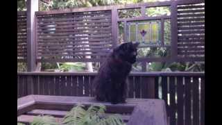 Cat feat. Golliwogs Cakewalk also by Debussy