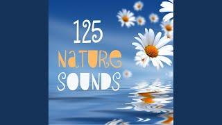 Thunderstorm Sound - Thunder Sound Effect