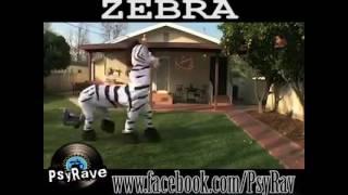 Psytrance Zebra