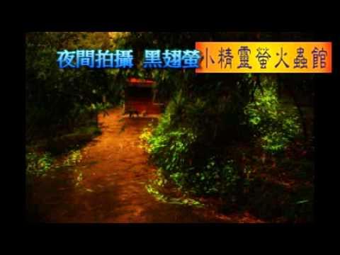 最新螢火蟲生態教育影片完整版─小精靈螢火蟲館提供 - YouTube