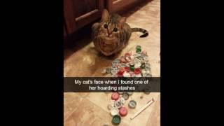 Hilarious Cat Snapchats! --- CAT PHOTO COMPILATION