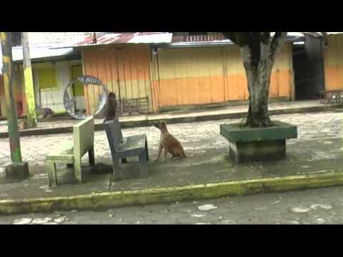 ecuador 2010 solvia lasse mishualli corto