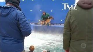 Vídeo mostra cachorro sofrendo maus tratos em cena de filme