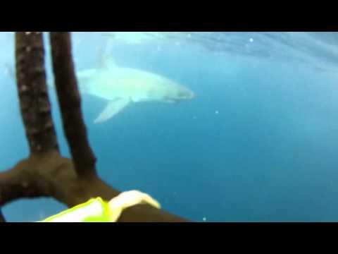 Teaser Shark.mp4