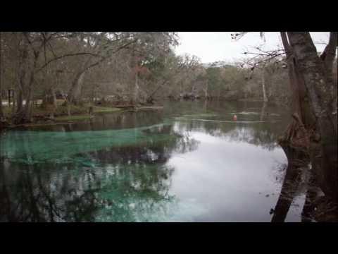 Not Even The Trees de Hootie The Blowfish Letra y Video