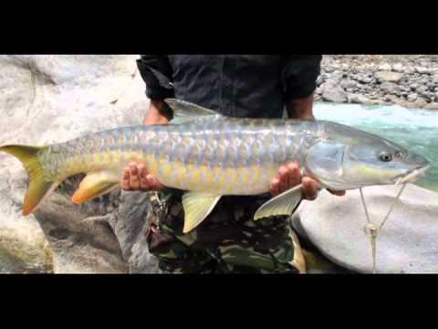 MAHSEER FISHING IN  East- Nepal