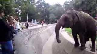 ZOO vrt u Beogradu - Kalina (Indjija) i slon (Elephant)