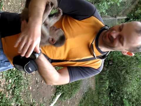 Monkey Papa in El Paseo de los Monos, Puyo, Ecuador