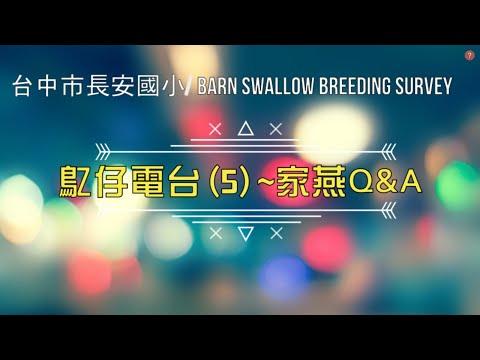 鳦仔電台5 家燕Q&A - YouTube