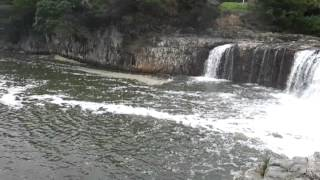 Beautiful Waterfall - Bay of Islands | Hururu Falls New Zealand |
