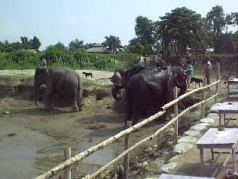 Adventurous Women Nepal Trip 2009 – Bathing the Elephants at Chitwan National Park – Part 3