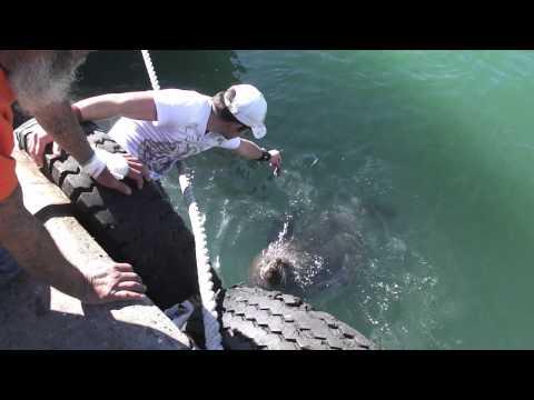 Afrique du Sud 2012 [Partie 4] Cape Town