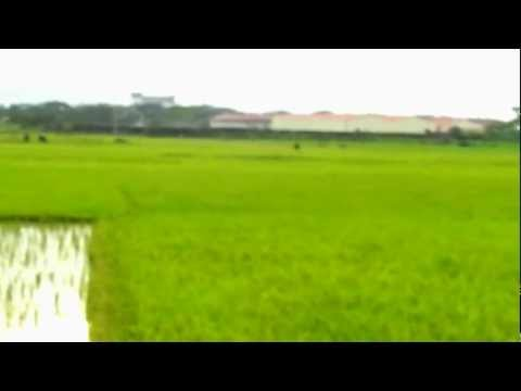360 shot of the Rice fields