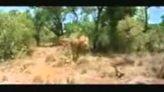 Videos engraçados: fugindo do Leão
