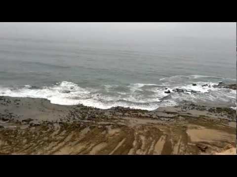 chameau sur l'océan