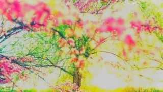 Ira vejo flores em você