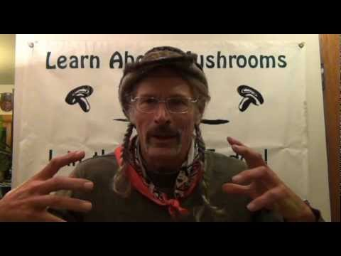 Mushroom Trips with Larry Evans 2013