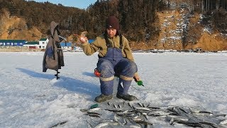 2 buckets on a sunny day: Winter fishing for giant smelt on Sakhalin, Russia. ワカサギ釣り Рыбалка корюшка