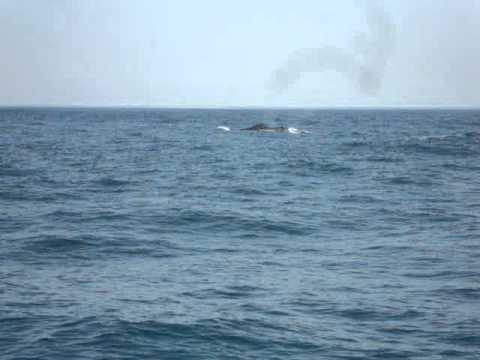 Whale watching – Knysna South Africa