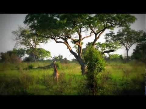 africa5.mov