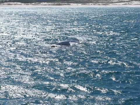 whale spotting hermanus South Africa dec 2010.avi