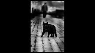 Carolina Slim Black Cat Trail (1952)